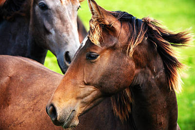 Close-up Of Horses Art Print by Jan Brons