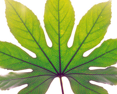 Close Up Of Leaf Vein Art Print by Panoramic Images