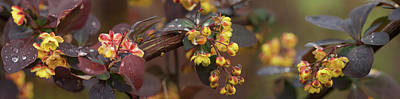 Multi Colored Photograph - Close-up Of Multi-colored Flowers by Panoramic Images