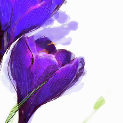 Digital Art - Close Up Of Purple Crocus by Jan Richter