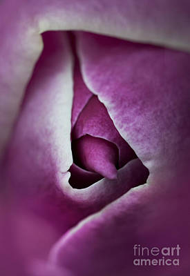Close Up Of Purple Magnolia Flower Art Print by Jaroslaw Blaminsky