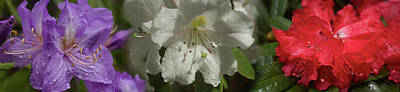 Flower In Rain Wall Art - Photograph - Close-up Of Rain On Assorted by Panoramic Images