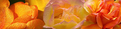 Close-up Of Raindrops On Flowers Art Print by Panoramic Images