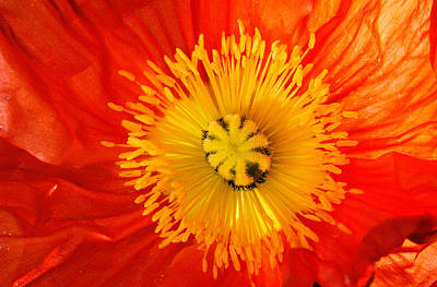 Large Group Of Objects Photograph - Close Up Of Red And Yellow Flower by Panoramic Images