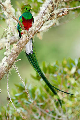 Focus On Foreground Photograph - Close-up Of Resplendent Quetzal by Panoramic Images