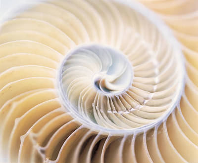 Shell Spiral Photograph - Close Up Of Shell by Panoramic Images