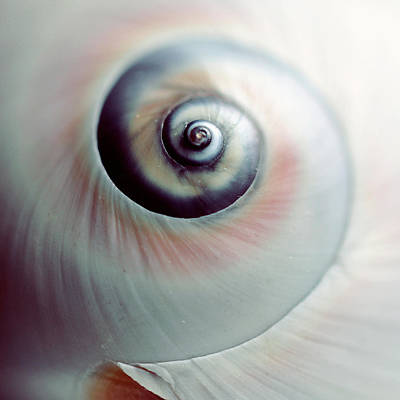 Photograph - Close Up Of Spiral Shell by Lisa Sieczka