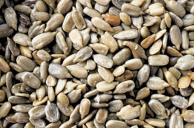 Sunflower Seeds Photograph - Close-up Of Sunflower Seeds by Anonymous