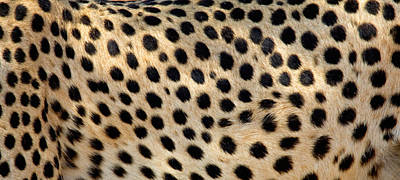 Close-up Of The Spots On A Cheetah Art Print by Panoramic Images