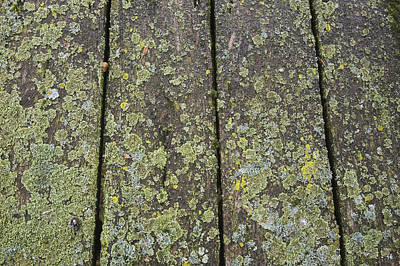 Old Plank Tables Photograph - Close Up Of The Wooden Planks by Perry Mastrovito