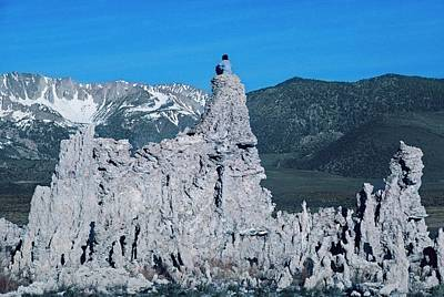 Drought Wall Art - Photograph - Close-up Of Tufa Towers At Mono Lake by Peter Menzel/science Photo Library