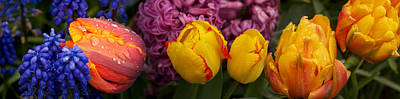 Flower In Rain Wall Art - Photograph - Close-up Of Tulip Flowers Buds by Panoramic Images