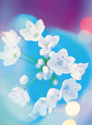 White Flower Photograph - Close Up Of White Flowers by Panoramic Images