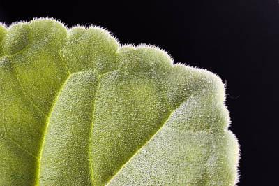 Close-up Texture Art Print