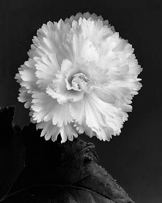 Begonias Photograph - Close Up View by J. Horace McFarland