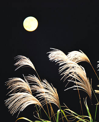 Close Up View Of Foxtail Grass Art Print by Panoramic Images