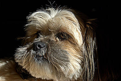 Canine Photograph - Close Up Zoe by Laura Strain