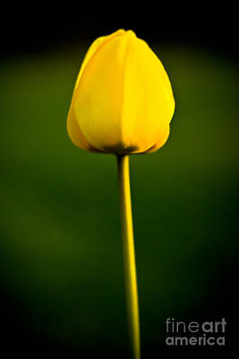Photograph - Closed Yellow Flower by John Wadleigh