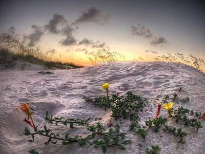 Digital Art - Closeup Flowers On The Beach by Michael Thomas
