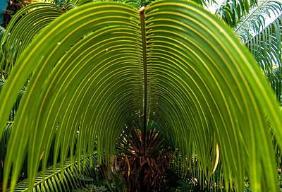 Photograph - Closeup Of A Palm Tree Leaf by Alex Grichenko