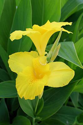 Canna Photograph - Closeup Of A Tropical Yellow Canna Lily by Tracey Harrington-Simpson