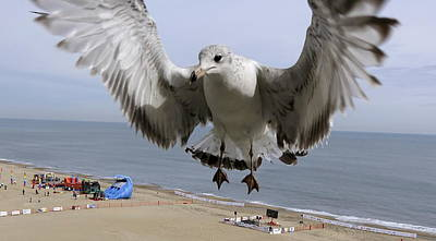 Closeup Of Hovering Seagull Art Print by Richard Rosenshein