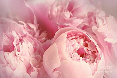 Photograph - Closeup Of Peony Flowers  by Sandra Cunningham