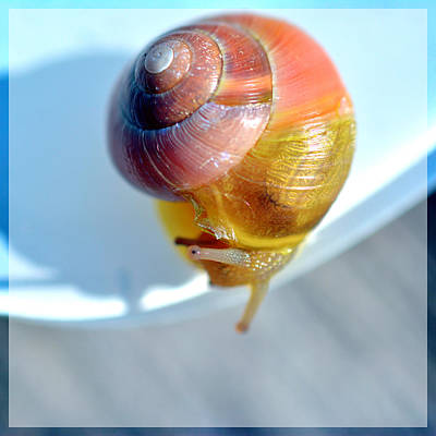 Closeup Of Snail Original