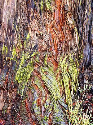Closeup Of Trunk Of Coastal Redwood At Korbel Wineries Estate Near Russian River-california Original by Ruth Hager
