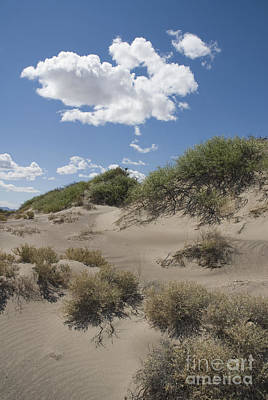 Photograph - Cloud And Sand Dunes At Ash Meadows by Dan Suzio