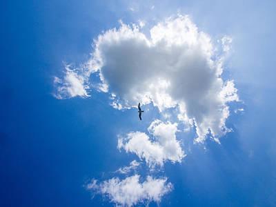 Photograph - Cloud And Seagull by Martin Liebermann