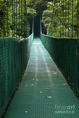Photograph - Cloud Forest Bridge by Carrie Cranwill
