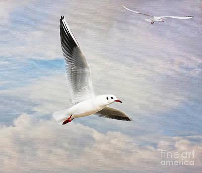 Photograph - Cloud Gulls by Lisa Cockrell