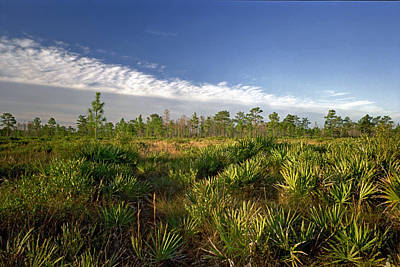 Photograph - Cloud Line And Palmetto. Triple N Ranch.   by Chris  Kusik