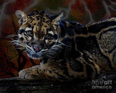 Photograph - Clouded Leopard One by Ken Frischkorn