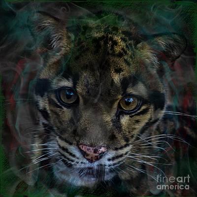 Photograph - Clouded Leopard Three by Ken Frischkorn