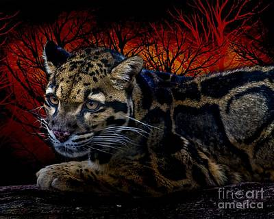 Photograph - Clouded Leopard Two by Ken Frischkorn