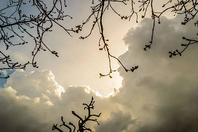 Photograph - Clouds And Branches by Yvon van der Wijk