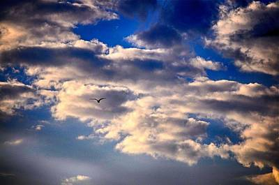 Photograph - Clouds And Gull by Kristina Deane