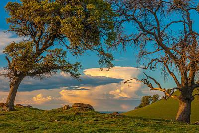 Clouds Between Trees Art Print