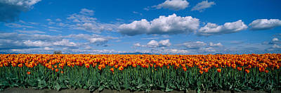 Conformity Photograph - Clouds Over A Tulip Field, Skagit by Panoramic Images