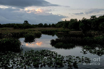 Clouds Over Green Cay Wetlands Art Print by Mark Newman