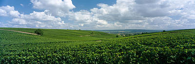 Winemaking Photograph - Clouds Over Vineyards, Mainz by Panoramic Images