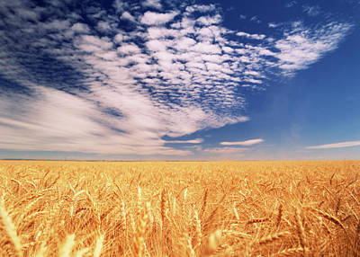 Clouds Over Wheat Field (large Format Art Print by Stuart Westmorland