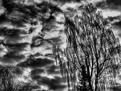 Photograph - Clouds That Pin Branches  by Michael Canning