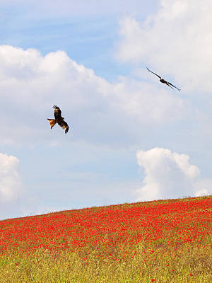 Red Poppies Photograph - Cloudscape Over Poppy Fields by Gill Billington