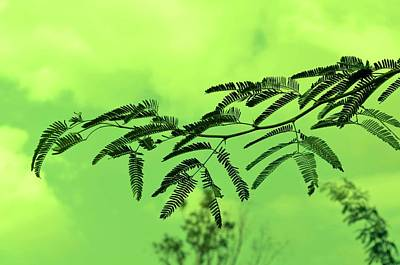 Cloudy Green Nature Art Print by Deepti Chahar