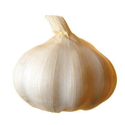 Clove Of Garlic Print by Jim Hughes