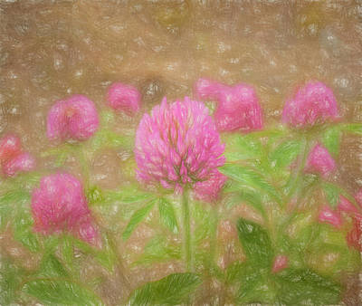 Photograph - Clover Flower by Kim Hojnacki
