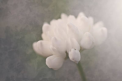 Clover In White Art Print by Faith Simbeck